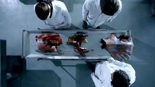 Mermaid-Fish-Tale-mermaid-autopsy