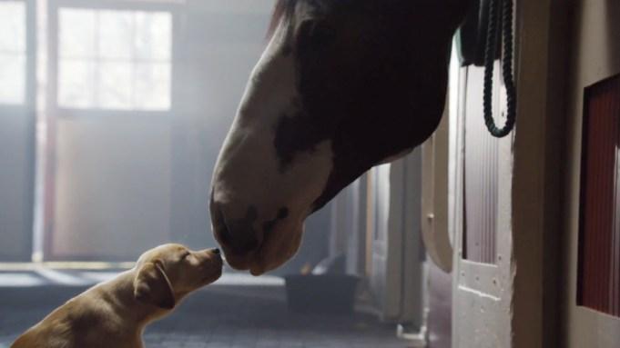Super Bowl Ad Previews Sacrifice Element