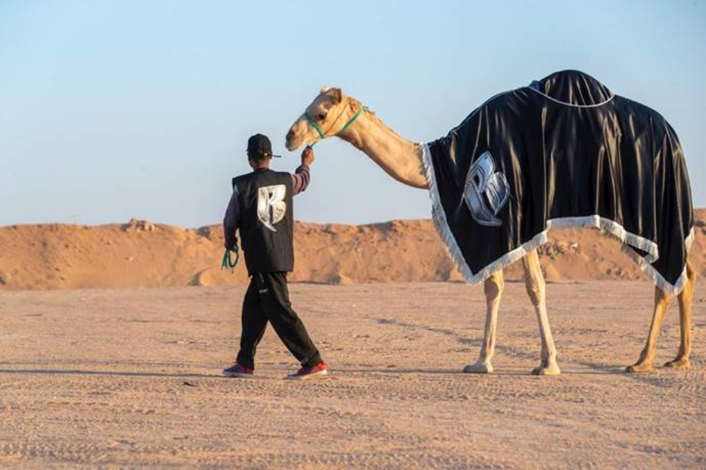 Verzuz Co-Founder Swizz Beatz's New Obsession: Camel Racing (EXCLUSIVE)